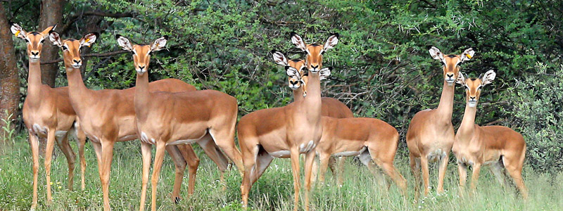 Cruiser Hunting Safaris Specials